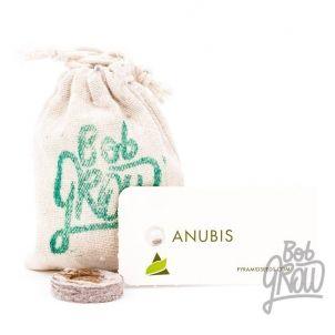 ANUBIS Pyramid Seeds