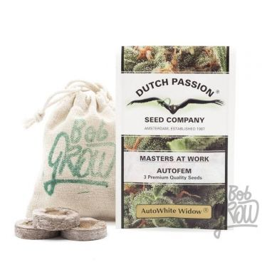 AUTO WHITE WIDOW DUTCH PASSION Dutch Passion
