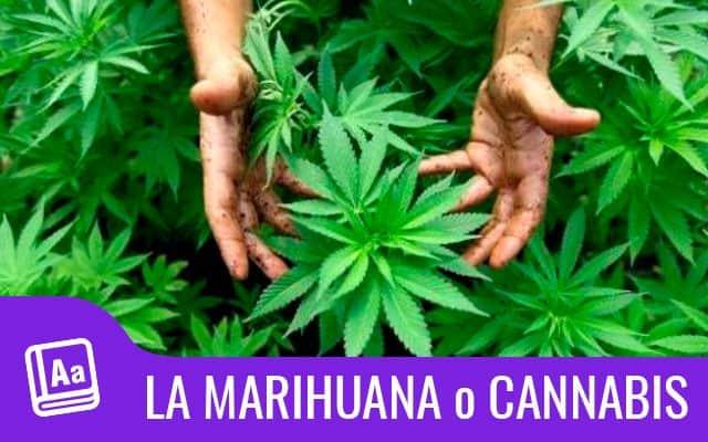 Historia marihuana