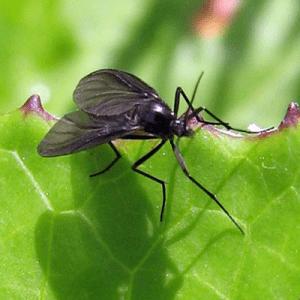 Eliminar mosca negra o de la humedad 2
