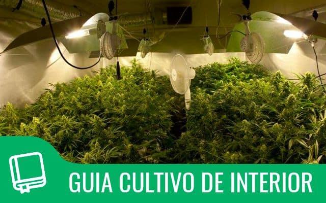 Guia de cultivo interior