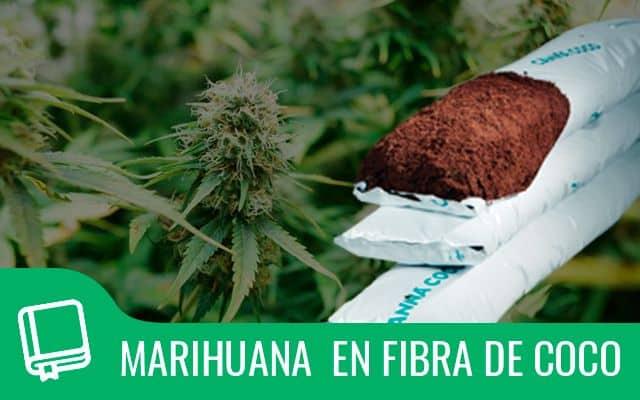 afe46aff9ac2 Uno de los mayores hándicaps en el cultivo de marihuana es lograr que la  planta crezca de manera adecuada y con los nutrientes esenciales que  aportan los ...