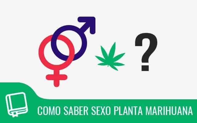 ¿Cómo saber el sexo de una planta de marihuana? 1