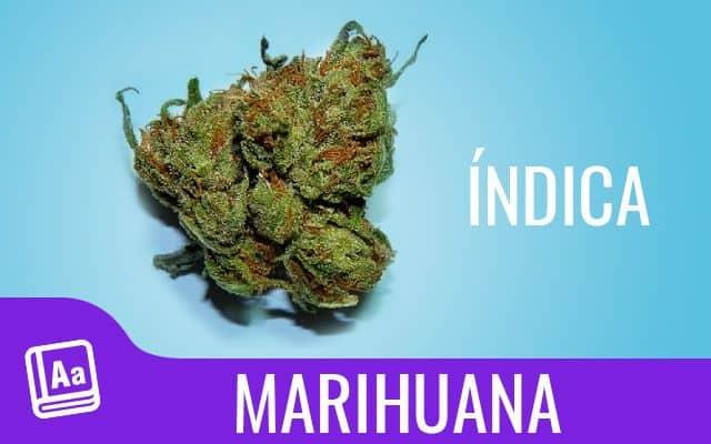 Marihuana índica 1