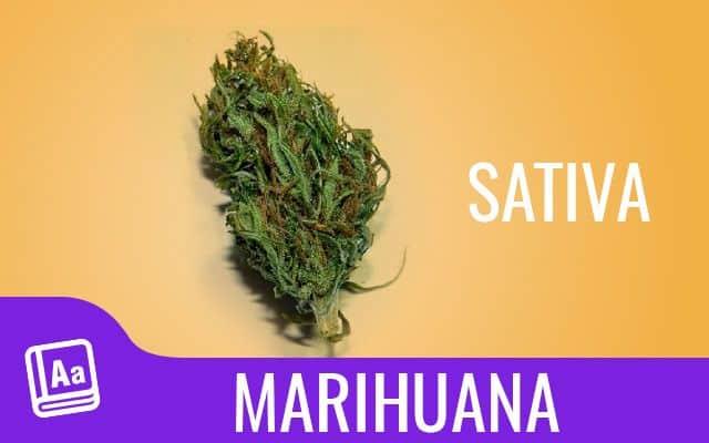 Marihuana Sativa