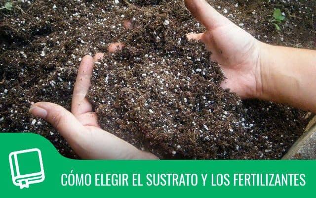 Cómo elegir el sustrato y los fertilizantes 1