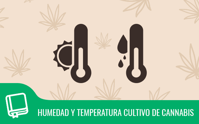Humedad y temperatura en el cultivo de cannabis 8