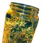 Curado de marihuana en agua, cómo eliminar el sabor a clorofila y mucho más 2