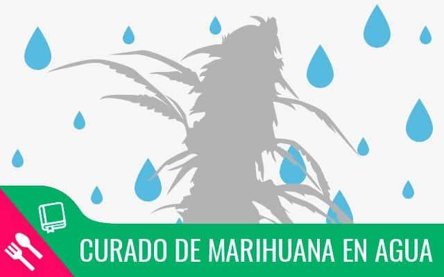 Curado de marihuana en agua, cómo eliminar el sabor a clorofila y mucho más