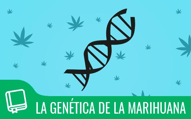 La genética de la marihuana 1